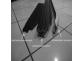 Подножки Mercedes Vito W639